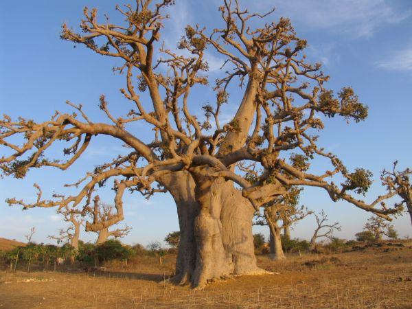 Sur Mesure au Sénégal : Sénégal, l'intégrale