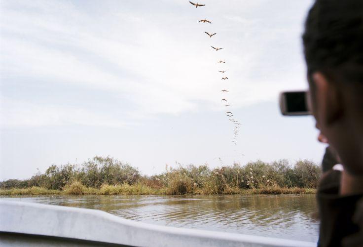 Parc national des oiseaux du Djoudj - Saint-Louis - Sénégal