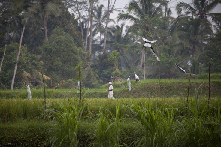 Environs d'Ubud - Bali