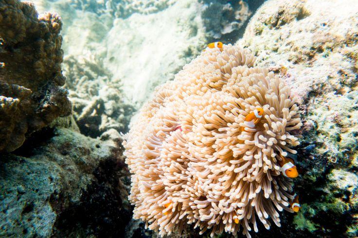Bawah Reserve - Indonesie