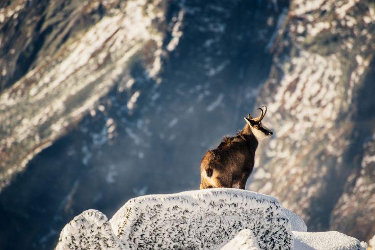 Hautes Tatras - Pologne