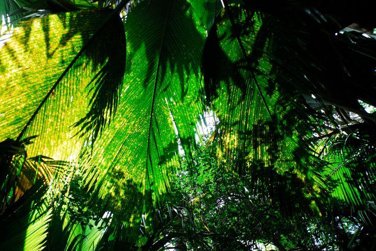 Edens nature aux Seychelles - Bird Island & Praslin
