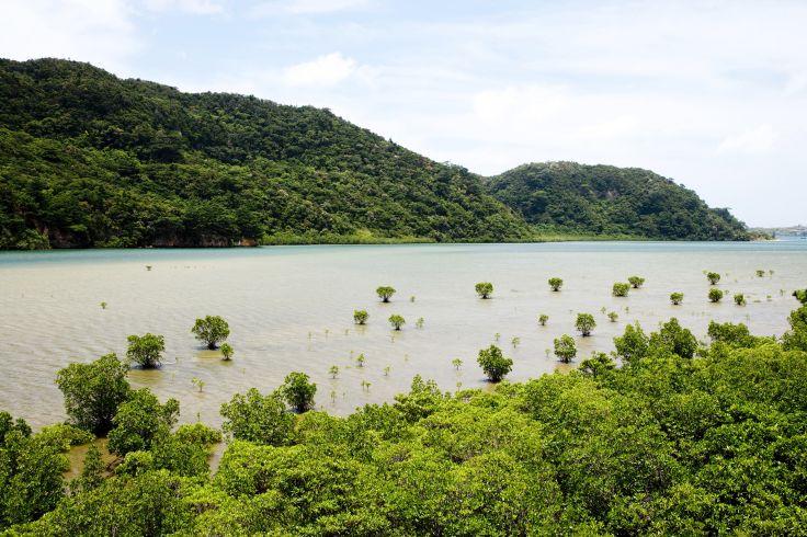 Iriomote-jima - japon
