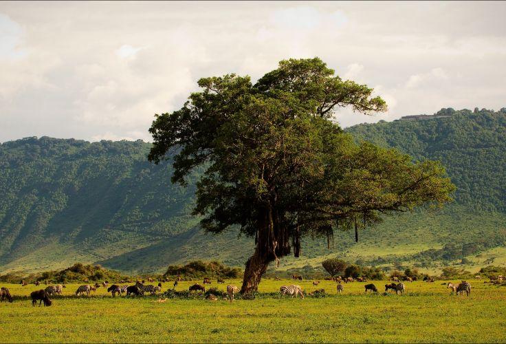 Cratère du Ngorongoro - Tanzanie