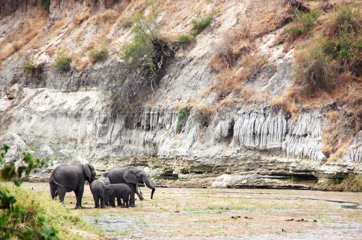Eléphants dans le parc national de Tarangire - Tanzanie