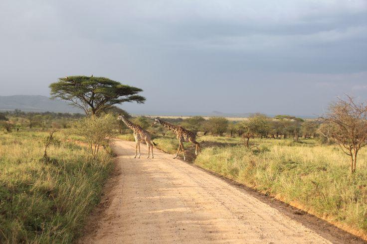 Entre Karatu et le parc national du Serengeti - Arusha - Tanzanie