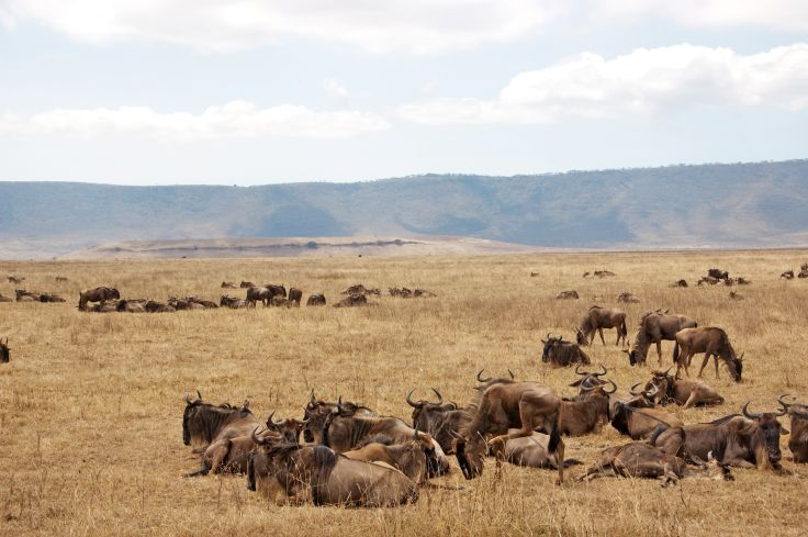 Parc national du Ngorongoro - Région d'Arusha - Tanzanie