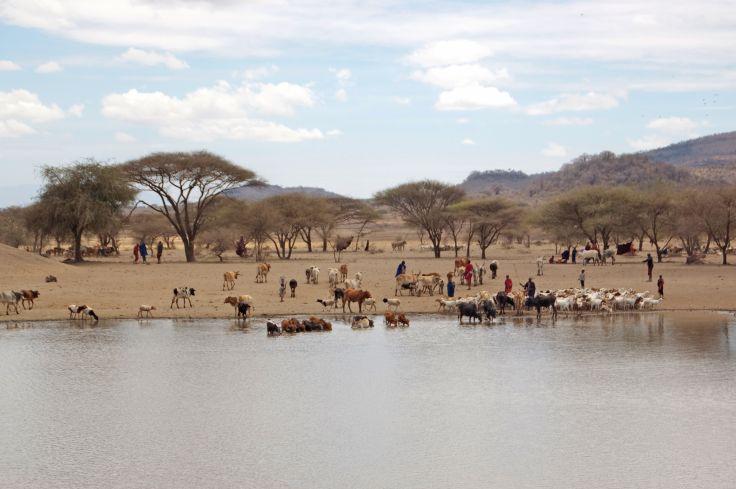 Dans les alentours de Karatu - District de Ngorongoro - Région d'Arusha - Tanzanie