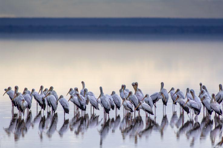 Lac Manyara - Tanzanie