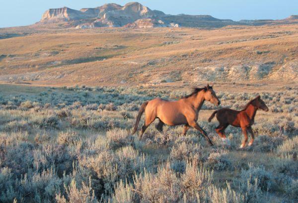 Sur Mesure au États-Unis : Mustangs et pépites d´or