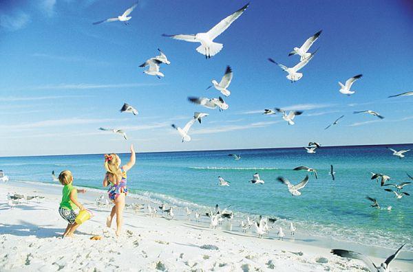 Pélicans et sable blanc - La Floride en famille
