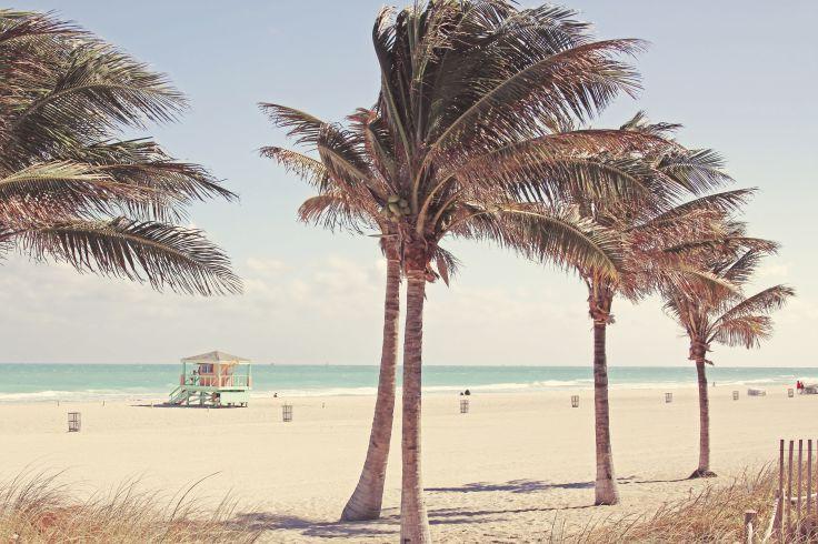 Dauphins & sable fin - Une Floride nature en famille