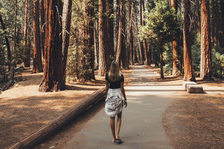Sequoia National Park - Etats-Unis