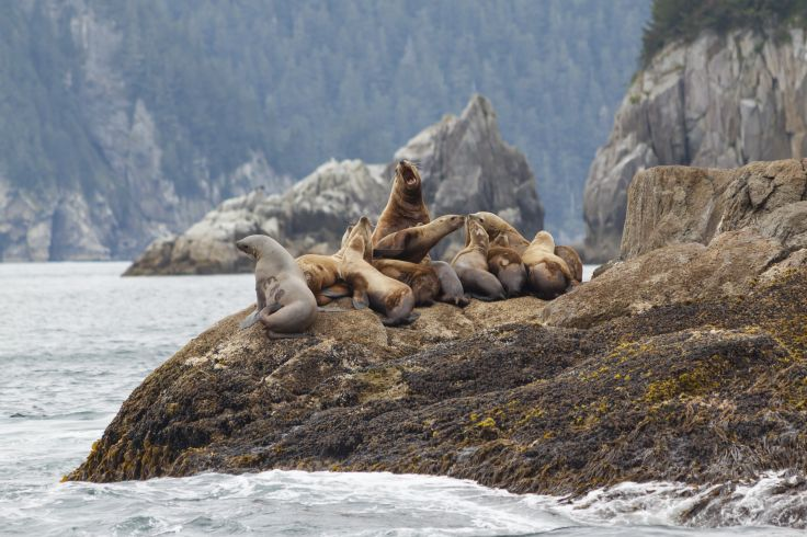 Parc national de Kenai Fjords - Alaska - Etats-Unis