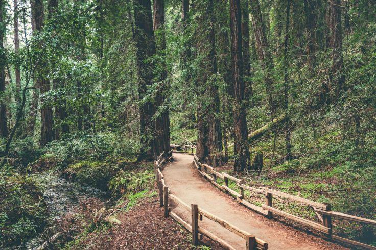 Hendy Woods State Park - Etats-Unis