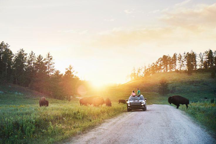 Custer State Park - Dakota du Sud - Etats-Unis