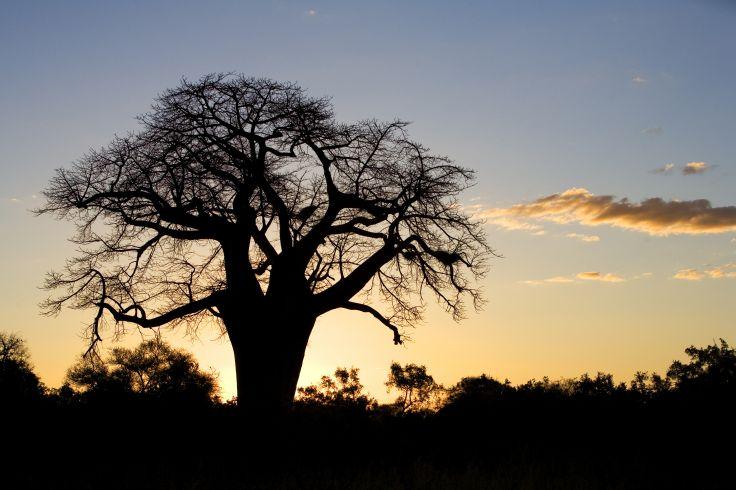 Pafuri - Afrique du Sud