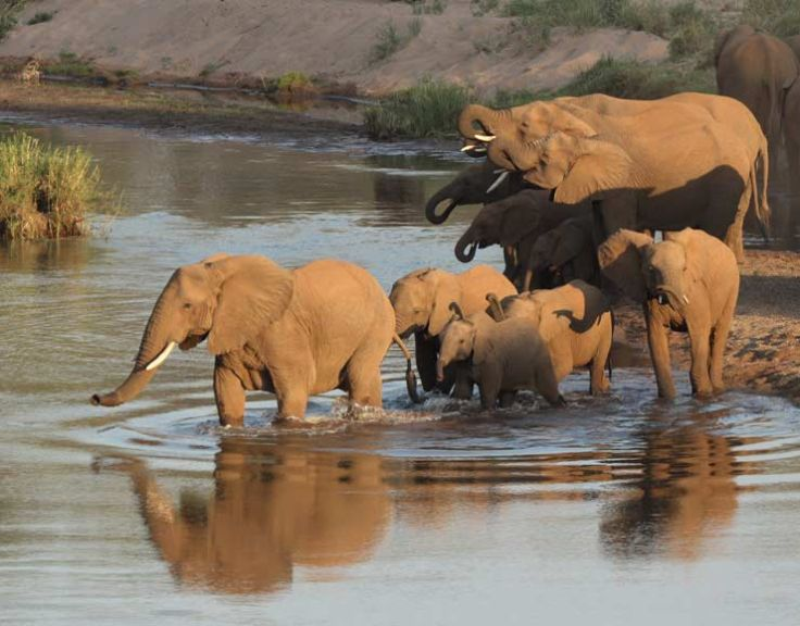 Circuit afrique du sud avec enfants safari en famille savane du maputaland voyageurs du monde - Comptoir de famille toulouse ...