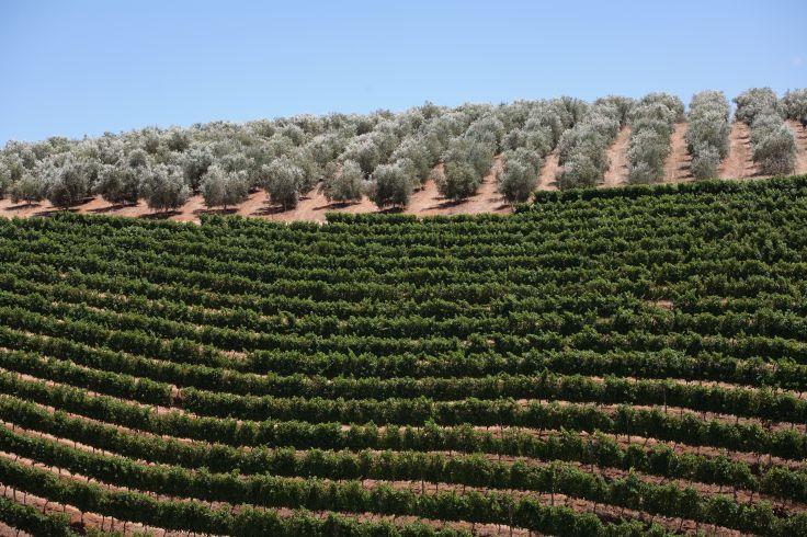 Route des Vins - Afrique du Sud