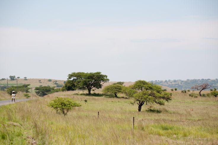 Zululand - Afrique du Sud