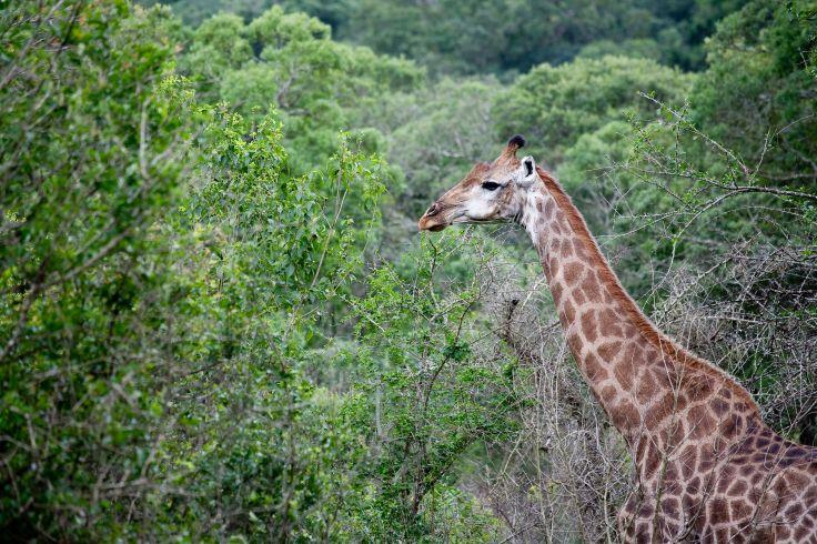 Mpumalanga - Afrique du Sud