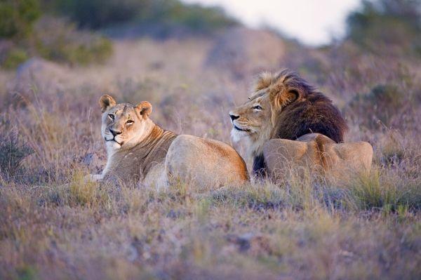 Du Cap au Kruger - L'Afrique du Sud à deux
