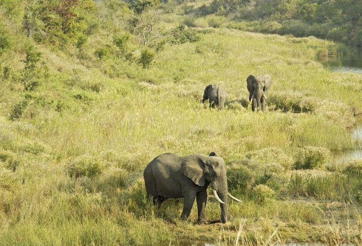 Le grand tour - Kruger, Pays Zulu, Route des Jardins & Le Cap