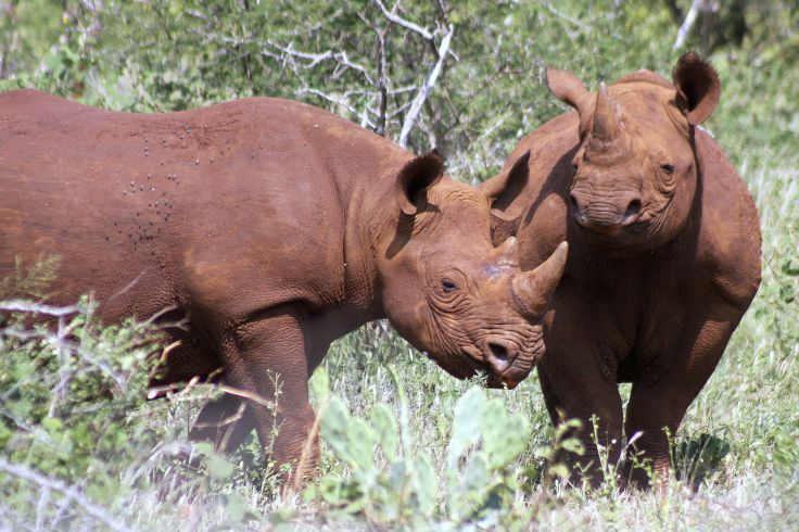 White Elephant Lodge - Réserve privée de Pongola - Afrique du Sud