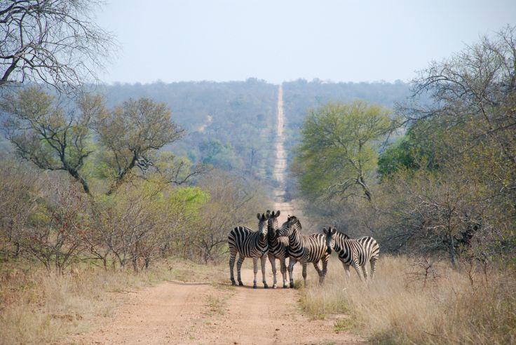 Parc national Kruger - Mpumalanga - Afrique du Sud