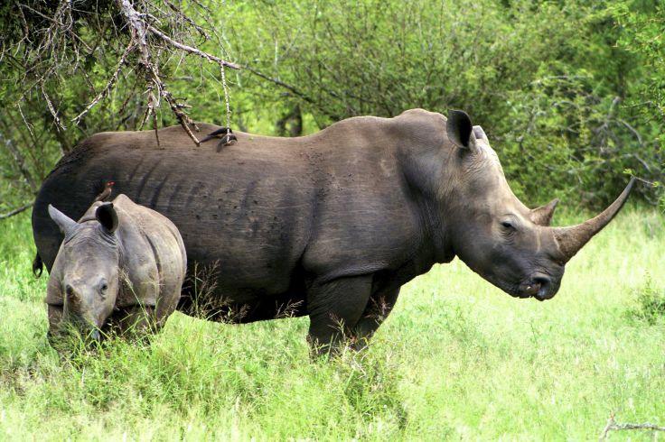 Parc royal national Hlane - Swaziland - Afrique du Sud