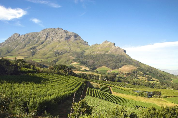Stellenbosch - Cap Occidental - Afrique du Sud