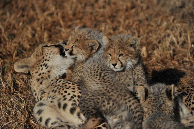 Ladysmith - Afrique du Sud