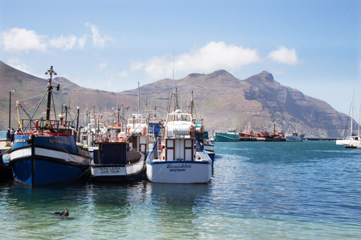 Hout Bay - Cap-Occidental - Afrique du Sud