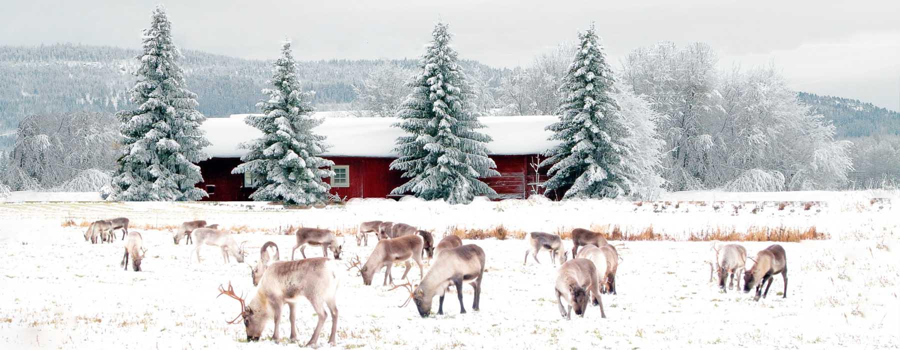 Jeudi 10 décembre LR-Destination-laponie-finlandaise
