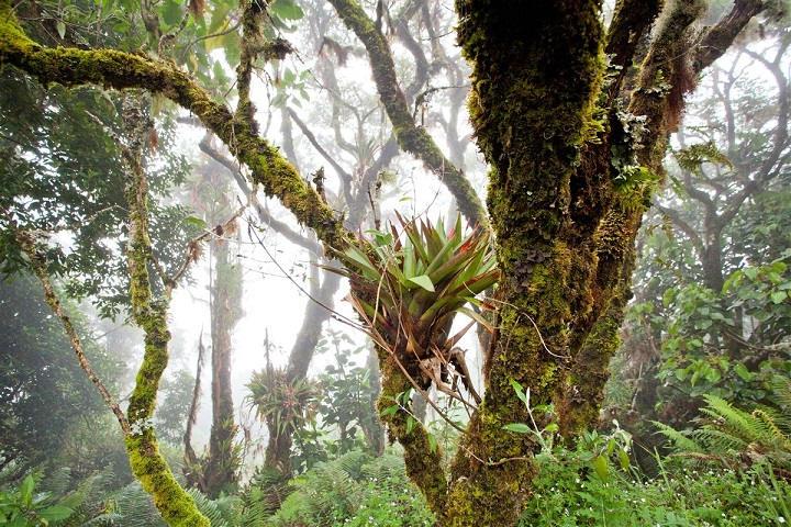 Forêt du Costa Rica