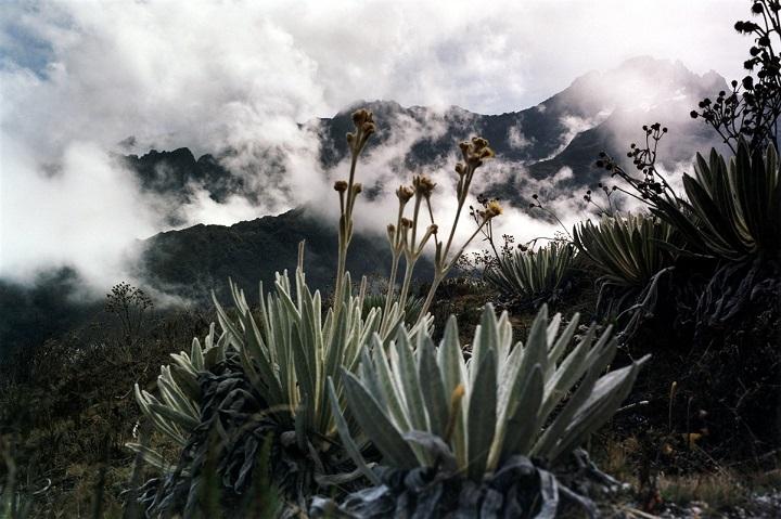 paysage de montagne et de végétation au Venezuela